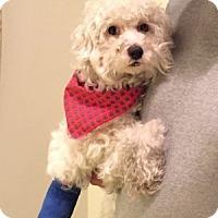 Adopt A Pet :: Merlin - Redondo Beach, CA