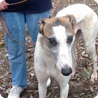Adopt A Pet :: Ale Kelly Ripa - Gerrardstown, WV