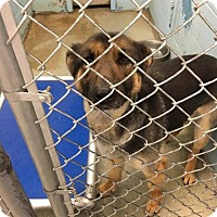 Adopt A Pet :: Xena - Evansville, IN