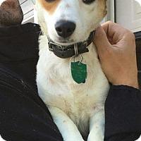 Adopt A Pet :: Manuella B - Seattle, WA