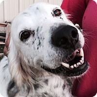Adopt A Pet :: DIXIE - Pine Grove, PA