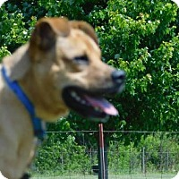 Adopt A Pet :: Jackson - Freeport, IL