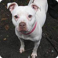 Adopt A Pet :: Sasha - Voorhees, NJ