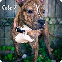 Adopt A Pet :: Cole - Newport, KY