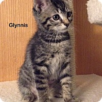 Adopt A Pet :: Glynnis - Portland, OR