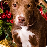Adopt A Pet :: Sweetie - Owensboro, KY