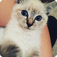 Adopt A Pet :: Sherwood - Lakewood, CA