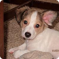 Adopt A Pet :: Mr. Magoo - Aiken, SC