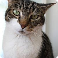 Adopt A Pet :: Laire - Chicago, IL
