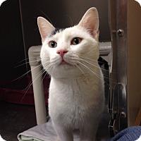 Adopt A Pet :: B-11 Fabio - Triadelphia, WV