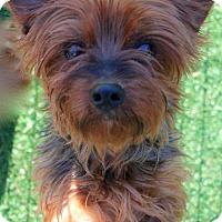 Adopt A Pet :: LiLo - Memphis, TN