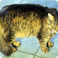 Adopt A Pet :: Mitch -Super! Dog Friendly - Arlington, VA