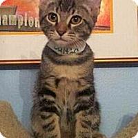 Adopt A Pet :: Dalton - Irvine, CA
