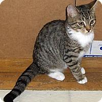 Adopt A Pet :: Hallie - Richmond, VA