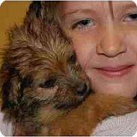 Adopt A Pet :: Scruffy - Chula Vista, CA