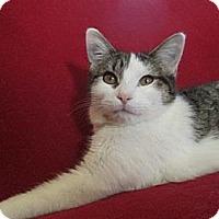 Adopt A Pet :: Bonnie - Richland, MI
