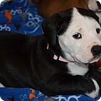 Adopt A Pet :: Clare - Portland, ME