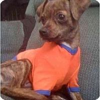 Adopt A Pet :: Havanna - San Francisco, CA