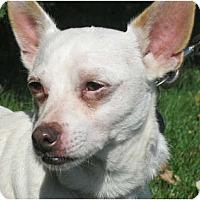 Adopt A Pet :: Pinky - Jacksonville, FL