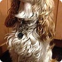 Adopt A Pet :: HUNTER - Mission Viejo, CA