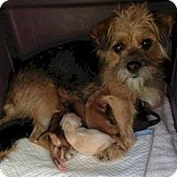 Adopt A Pet :: ZaZa - Long Beach, CA