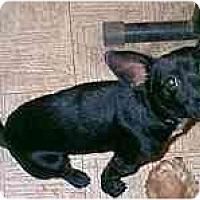Adopt A Pet :: Tommy - dewey, AZ