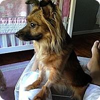 Adopt A Pet :: Coco - Rockaway, NJ