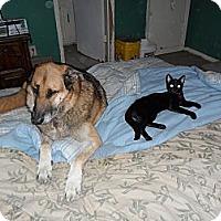 Adopt A Pet :: Stella - Pensacola, FL