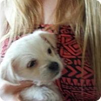 Adopt A Pet :: Joey - Perris, CA