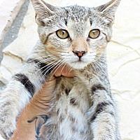 Adopt A Pet :: Cordelia - Santa Monica, CA