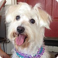 Adopt A Pet :: Cutie Pie Chloe - Vacaville, CA