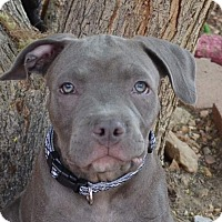 Adopt A Pet :: Jesse - Torrance, CA