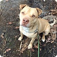 Adopt A Pet :: Jacob - Tinton Falls, NJ