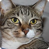 Adopt A Pet :: Mazie (LE) - Little Falls, NJ
