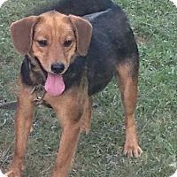 Adopt A Pet :: Molly - Morgantown, WV