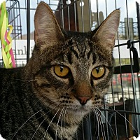 Adopt A Pet :: Jesse - San Fernando Valley, CA