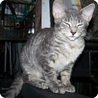 Adopt A Pet :: Bobsie Twin 1 - Morriston, FL