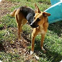 Adopt A Pet :: Greta - Bardonia, NY