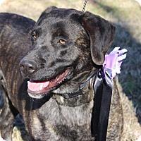 Adopt A Pet :: Clarabelle - Nashville, TN