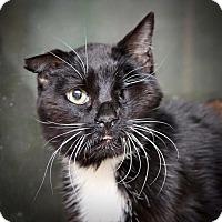 Adopt A Pet :: Tom - San Antonio, TX