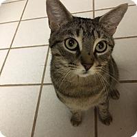 Adopt A Pet :: Mercedes - Devon, PA