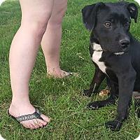 Adopt A Pet :: Bobbie - Glastonbury, CT