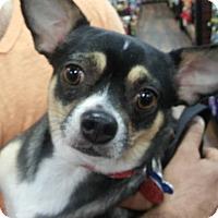 Adopt A Pet :: Toby - Pataskala, OH