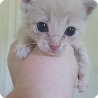 Adopt A Pet :: Owen $75 - Seneca, SC