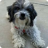 Adopt A Pet :: Evelyn - Thousand Oaks, CA