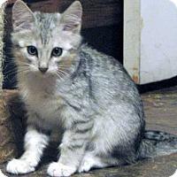 Adopt A Pet :: Lobo - Davis, CA