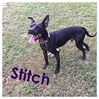 Adopt A Pet :: Stitch - St. Francisville, LA