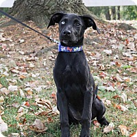 Adopt A Pet :: Indie - New Oxford, PA