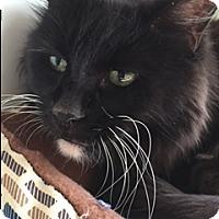 Adopt A Pet :: Macky - Divide, CO