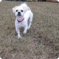 Adopt A Pet :: BLITZEN - East Windsor, CT